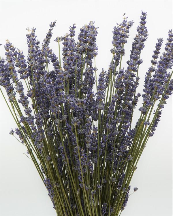 Lavendel - Naturell  blå