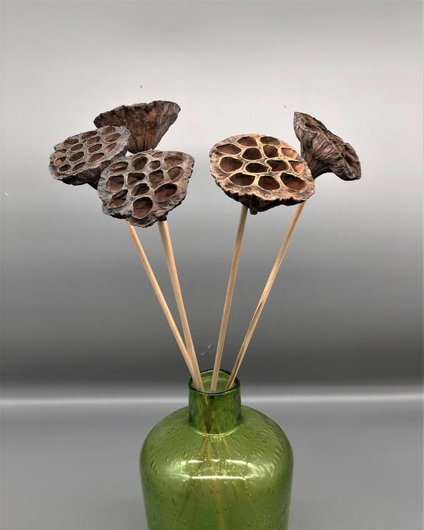 Lotus medium - Naturell
