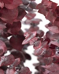 Konserverad Eucalyptus Baby - Röd