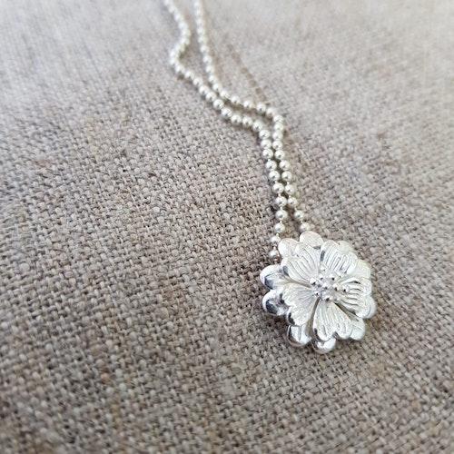 Vacker silverberlock
