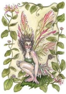 'Honeysuckle' Print