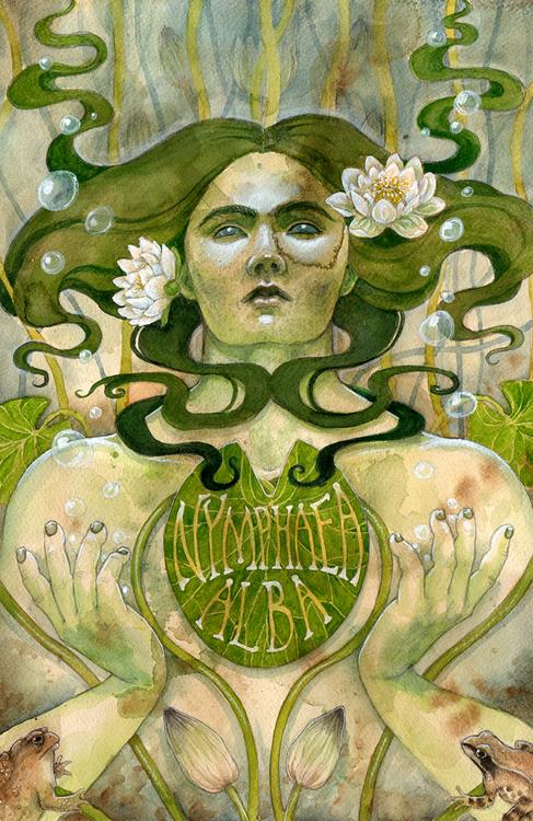'Waterlily' Original Painting