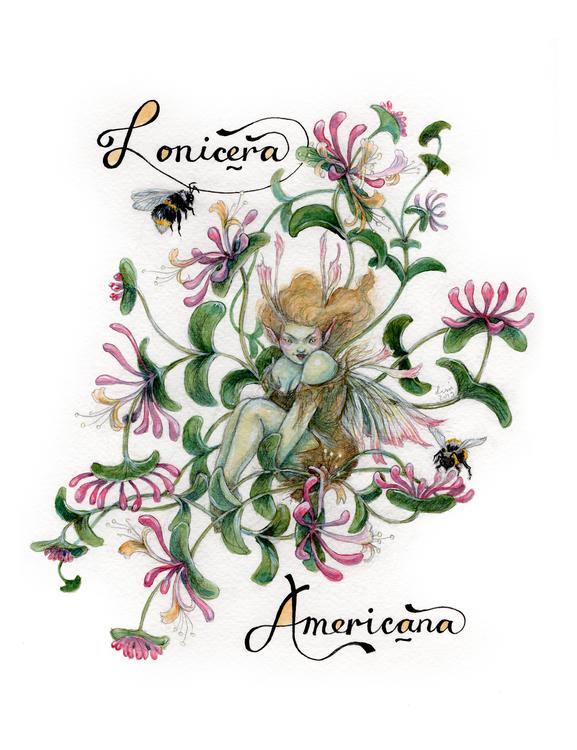 'American Woodbine' Original Drawing