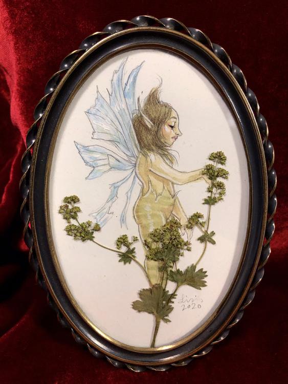 'Lady's Mantle' Original Framed Painting