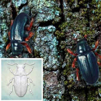 ProSvet Silikonform, Beetle M md1180
