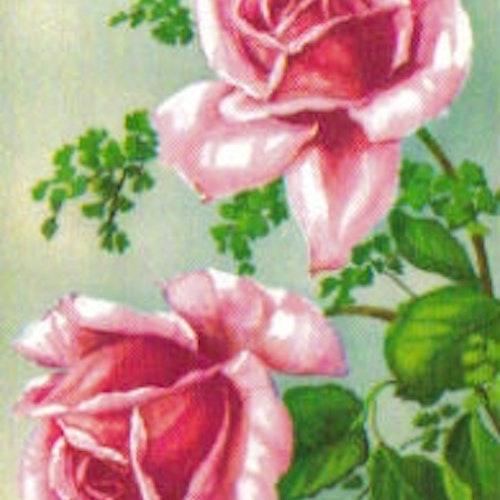 SB 005a Rosa rosor, liten