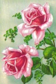 SB 005b Rosa rosor, mellanstor