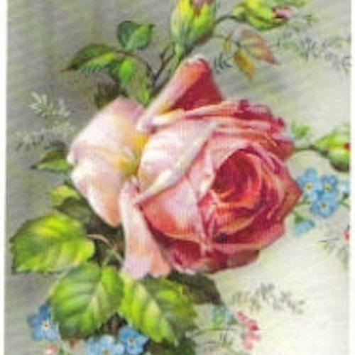 SB 045 Rosa ros