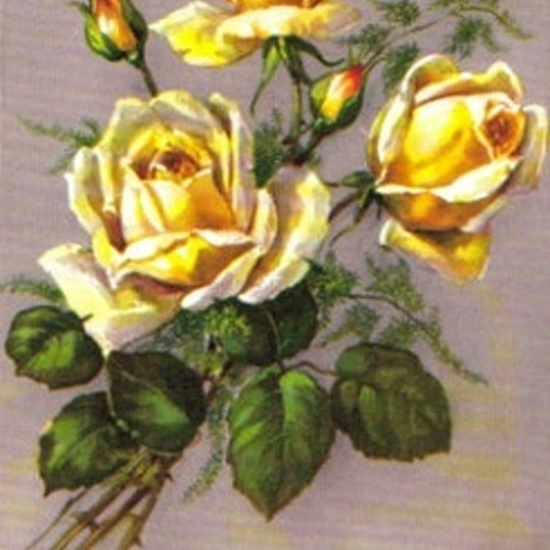 SB 079b Gula rosor, mellanstor