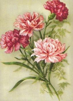 SB 081b Rosa nejlikor, mellanstor