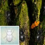 ProSvet Silikonform, Beetle 1xs md1172