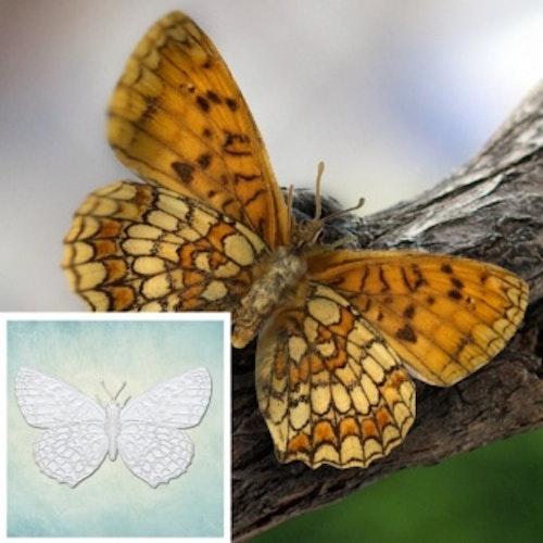 ProSvet Silikonform, Butterfly 5, M md1211