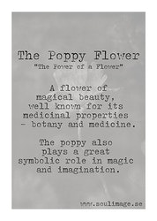 The Poppy Flower