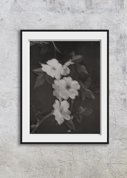 Rosehip Flowers