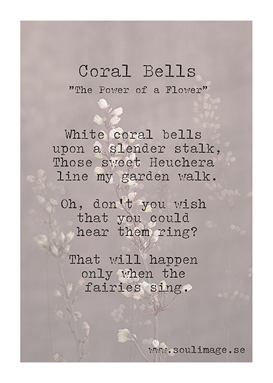 Corall Bells