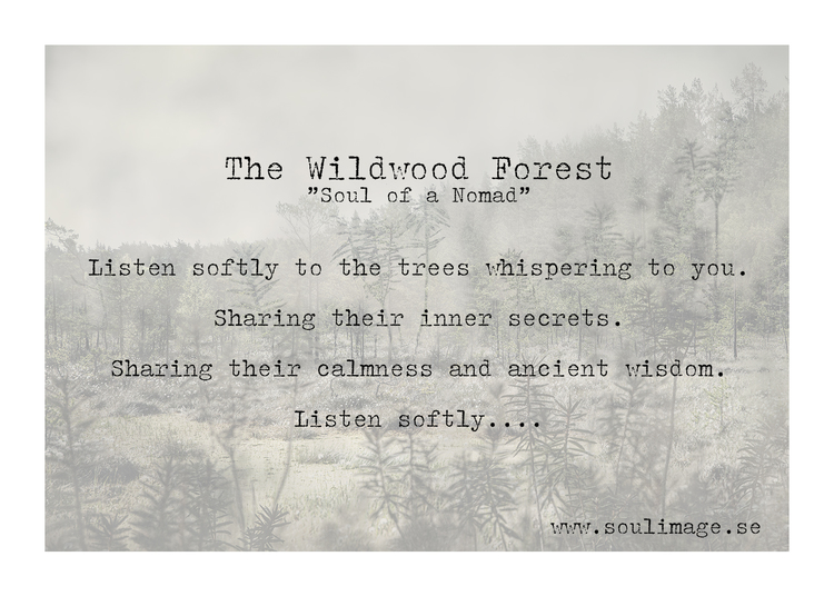 The Wildwood Forest