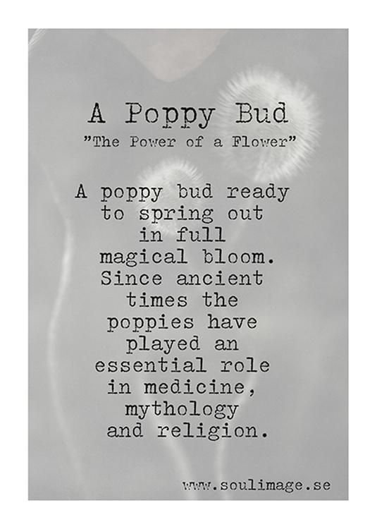 A Poppy Bud