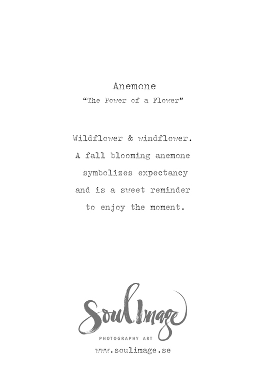 Anemone - Card