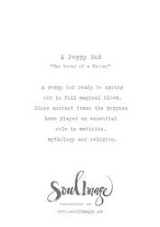 A Poppy Bud - Card