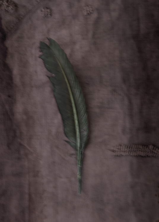 The Green Feather