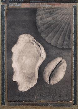 Seashells & Magic