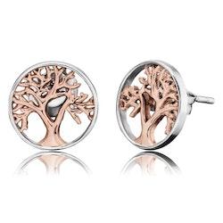 Örhänge Livets Träd silver/rosé studs