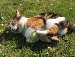 * KONG Kickeroo Mouse, med catnip *