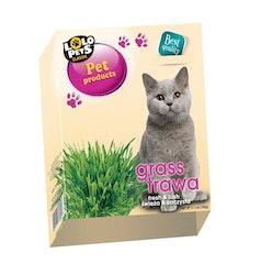 Kattgräs i låda