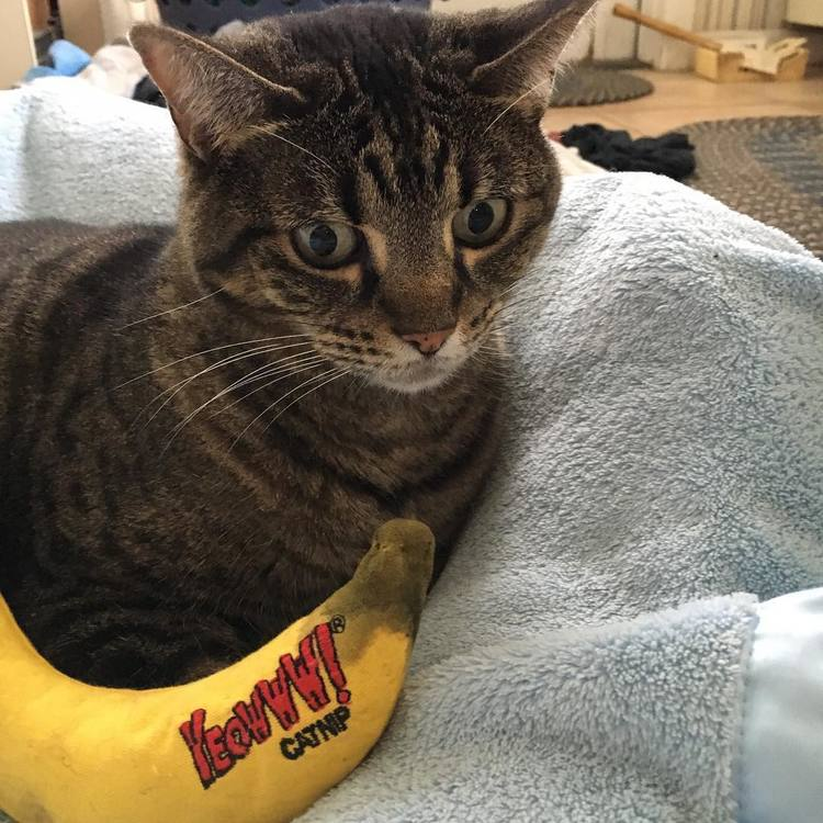 * Yeowww! Catnip Banana *