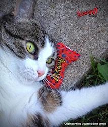 Yeowww!  Stinkies Catnip Sardines, Stars