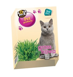 * Kattgräs i låda *