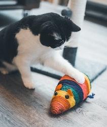 Super Rainbow Rodent