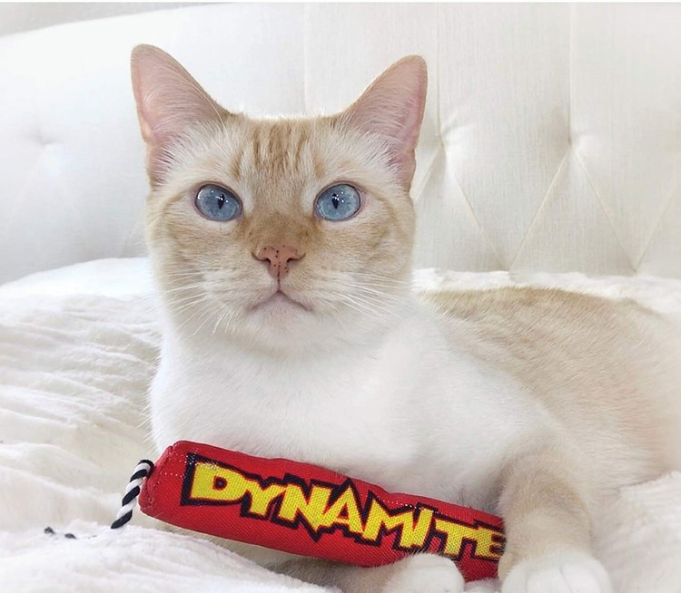 Petstages Green Magic Dynamite