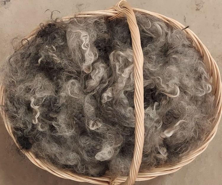 Tesad tvättad fårull