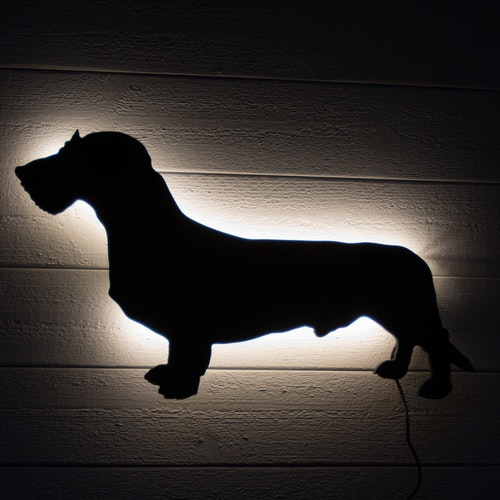 Wall light Coarse-haired Dachshund