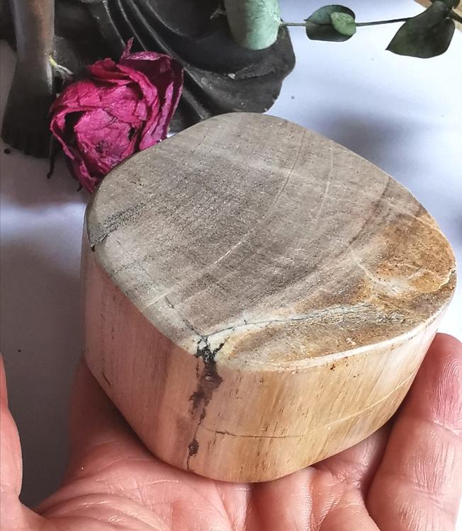Förstenat trä