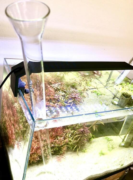 Fodertub glas
