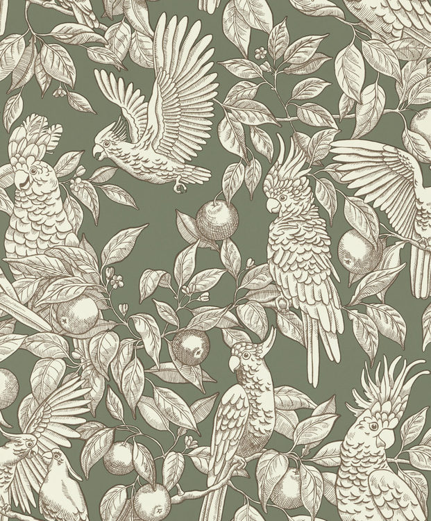 Tapet Talk about cockatoos Sage green