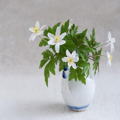 Upplyftande dofter / Vårens nystart
