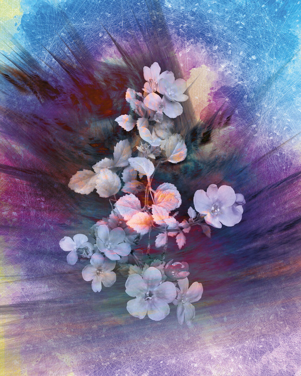 "Graphic Art ""Flower explosion"""
