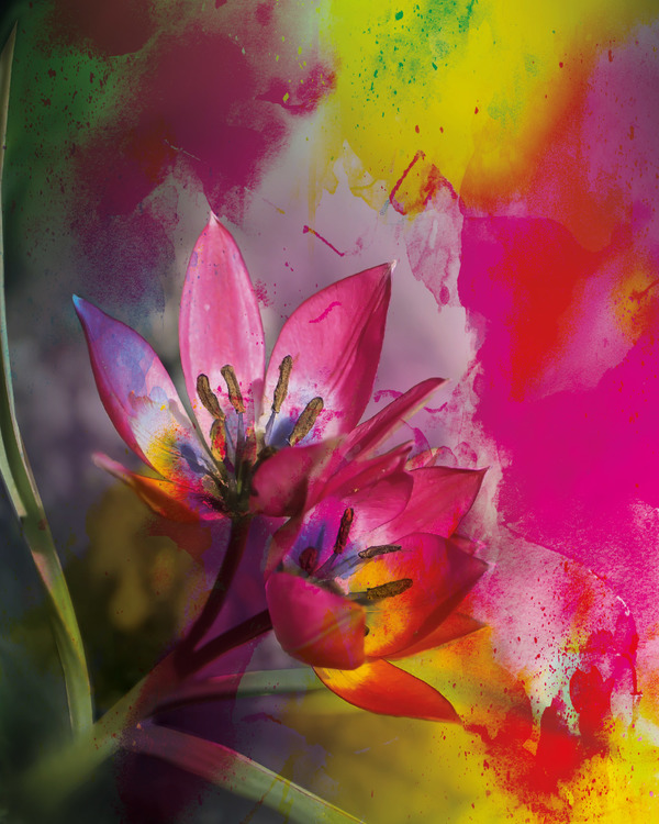 """Graphic Art """"The surrounding energy of the flower"""""""