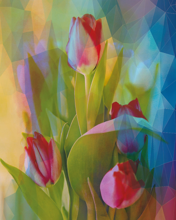 "Graphic Art ""My beloved tulips"""