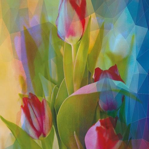 "Graphic Art ""My beloved tulips"""