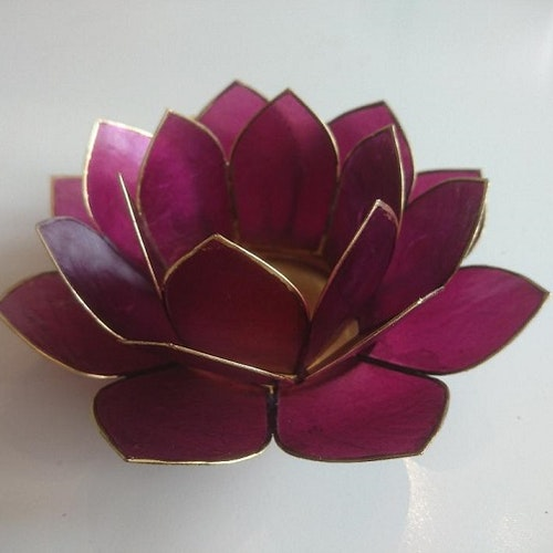 """Lotuslykta  """"Red Violet"""""""