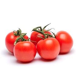 Tomat Kvist EKO