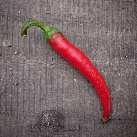 Chili 'Cayenne'