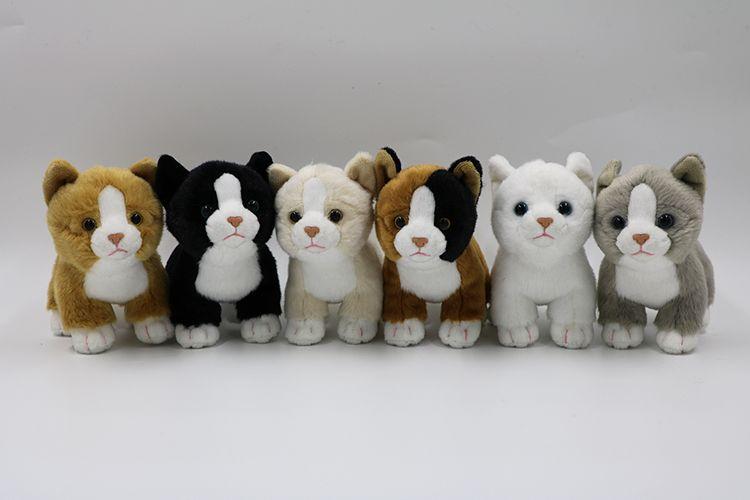 Katt 6-sorter
