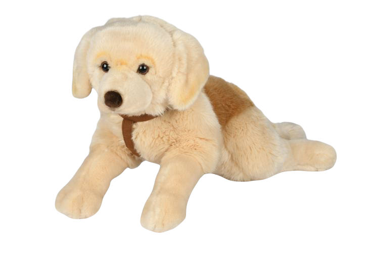Hund Golden retriver XL