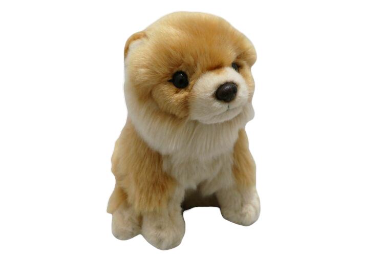 Hund Pomeranian