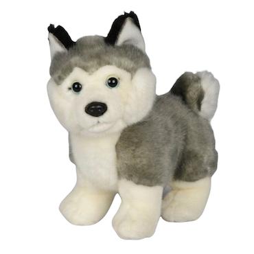 Hund Husky